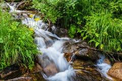 Montagne carpatiche Torrente montano ed erba verde sulla banca Fotografia Stock