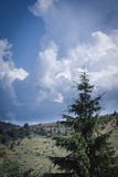 Montagne carpatiche, Ucraina Fotografie Stock
