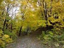 Montagne chauve, forêt, Kiev, Halloween Photographie stock