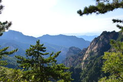 Montagne chinoise avec des arbres Photos libres de droits