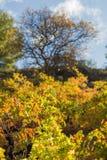 Montagne Cipro di Troodos di autunno del harverst di agricoltura della vigna della foresta della cantina Fotografia Stock Libera da Diritti