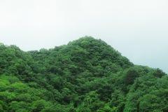 Montagne complètement des arbres et de la végétation Photographie stock libre de droits
