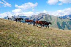 Montagne correnti dei cavalli Fotografia Stock