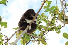 Montagne Cuscus photo stock