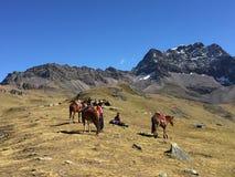 Montagne d'arc-en-ciel, province de Cusco, Pérou, le 11 mai 2016 : Un groupe photos libres de droits