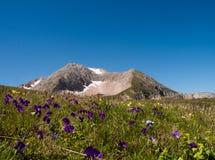 Montagne d'Oshten parmi les fleurs alpines Image stock