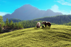 Montagne d'ours images stock