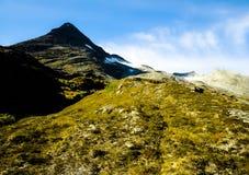 Montagne dans les nuages avec de belles fleurs Photo libre de droits