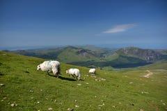 Montagne dans Snowdonia photos libres de droits