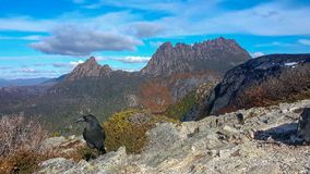 Montagne de berceau et un oiseau noir de currawong image stock