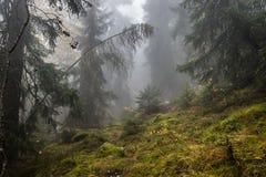 Montagne de brouillard de la Suisse images stock