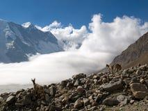 montagne de chèvres Photo libre de droits