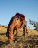 Montagne de cheval Image libre de droits