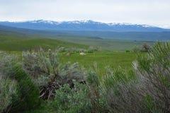 Montagne de Cuddy, Idaho image libre de droits
