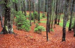 montagne de forêt Images libres de droits