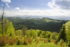 montagne de forêt au printemps Carpathien, Ukraine images stock