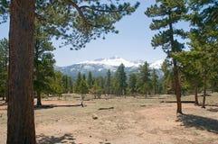 montagne de forêt du Colorado photos stock