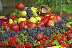 Montagne de fruit Photos stock