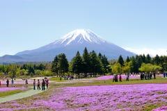 Montagne de Fuji avec de la mousse rose Image stock