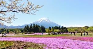 Montagne de Fuji avec de la mousse rose Images stock