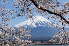 Montagne de Fuji avec l'enneigement sur le dessus avec des fleurs de cerisier photographie stock libre de droits