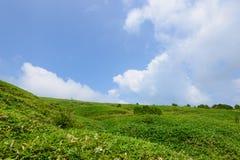 Montagne de Fujimidai à Nagano/à Gifu, Japon Image libre de droits