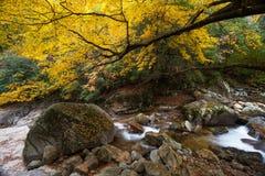 Montagne de Guangwu en automne Photos stock