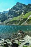 Montagne de Koscielec dans la pleine magnificence Images libres de droits