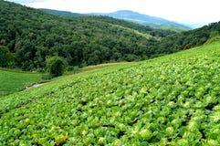 Montagne de légumes Images libres de droits