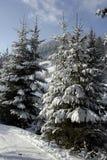 Montagne de l'hiver Photo stock