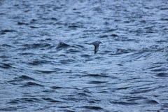 Montagne de lac de liberté de mouette de vol de mouche d'oiseau Image stock