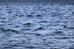 Montagne de lac de liberté de mouette de vol de mouche d'oiseau Photo libre de droits
