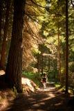 Montagne de Lagorai Alto adige de Trentino L'Italie, Forest Road Bocche Photo libre de droits