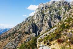 Montagne de Lovchen de vue avec des vaches montenegro Images libres de droits