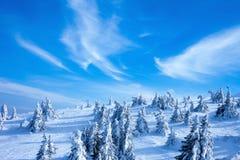 Montagne de Milou avec le pin sapins dans l'horaire d'hiver Photo libre de droits