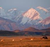 Montagne de neige dans le lever de soleil Photographie stock