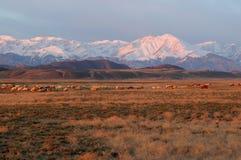 Montagne de neige dans le lever de soleil Photo libre de droits