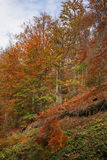 Montagne de Radan près de Prolom Banja serbia images libres de droits