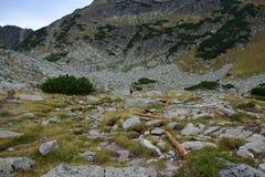 Montagne de Rila Photographie stock libre de droits