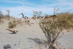 Montagne de roches, la Californie. Photographie stock libre de droits