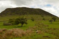 Montagne de Slemish en Irlande Photographie stock libre de droits