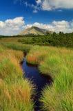 Montagne de Snezka et marais de tourbe Images stock