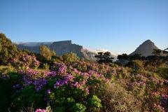 Montagne de Tableau et tête de lions, Cape Town Photographie stock