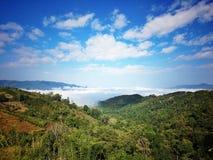 Montagne de thé dans XISHUANGBANNA Images libres de droits