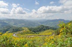 Montagne de tournesol mexicain Photo libre de droits