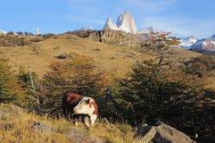 Montagne de vache et de Fitz Roy. image libre de droits