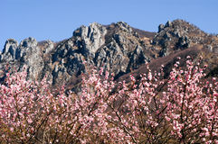 Montagne de vecchia de della de Denti le ressort au-dessus de Lugano Photos libres de droits