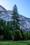 Montagne de Yosemite Images stock