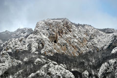 Montagne de Zlatibor Image libre de droits