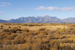 Montagne del capo con i fynbos asciutti Immagini Stock Libere da Diritti